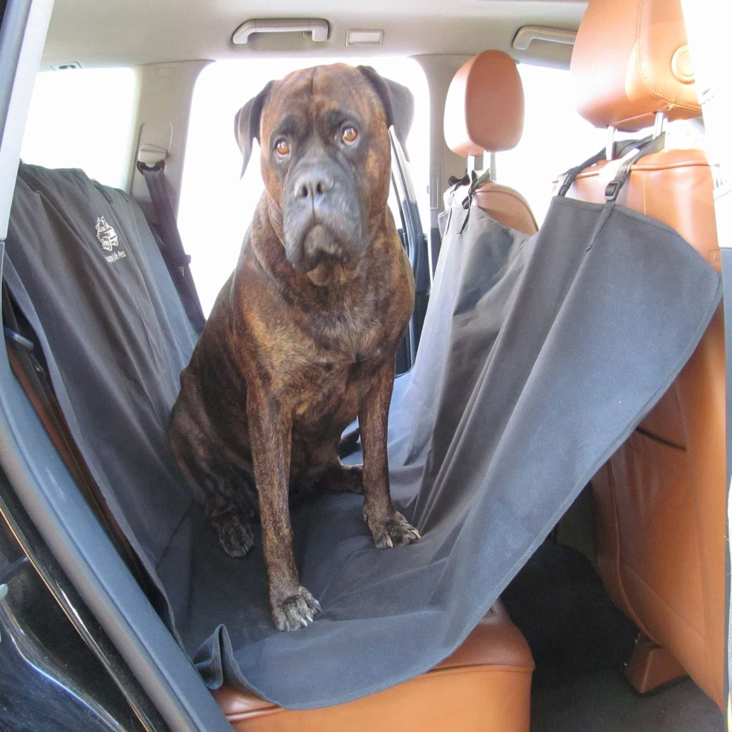 dog seat cover with dog