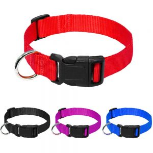 nylon dog collar main