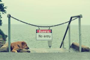 dog under chain gate