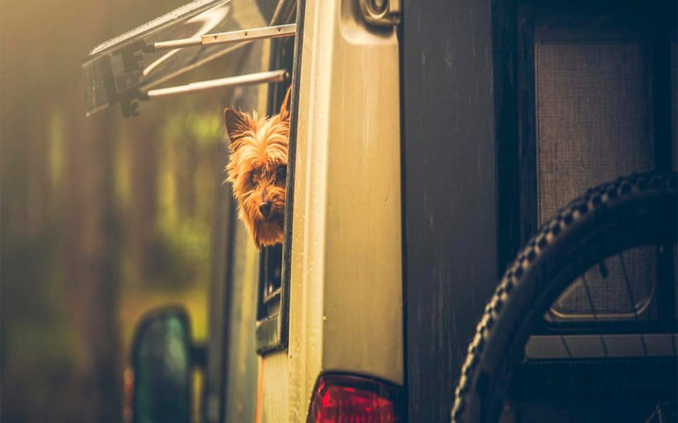 dog in rv window