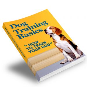 dog-training-basics