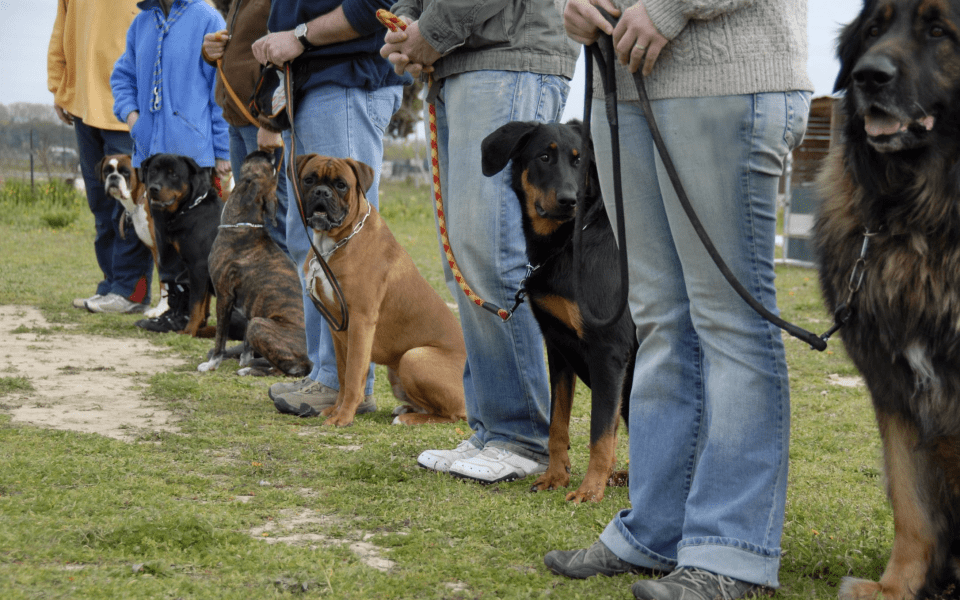 dogs training line